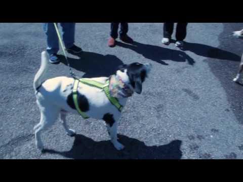 Cincinnati's Premier At Home Pet Care