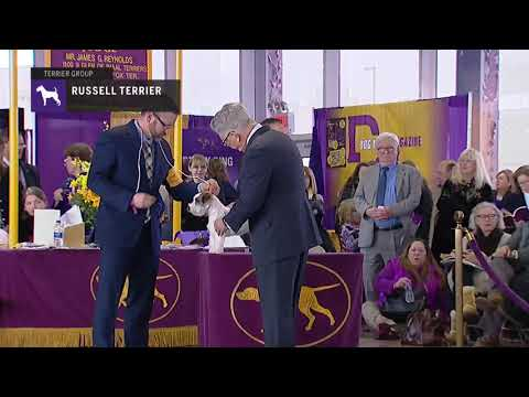 Russell Terriers | Breed Judging 2019