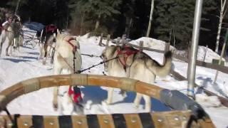 2014年3月アラスカ晴天の犬ぞり体験.