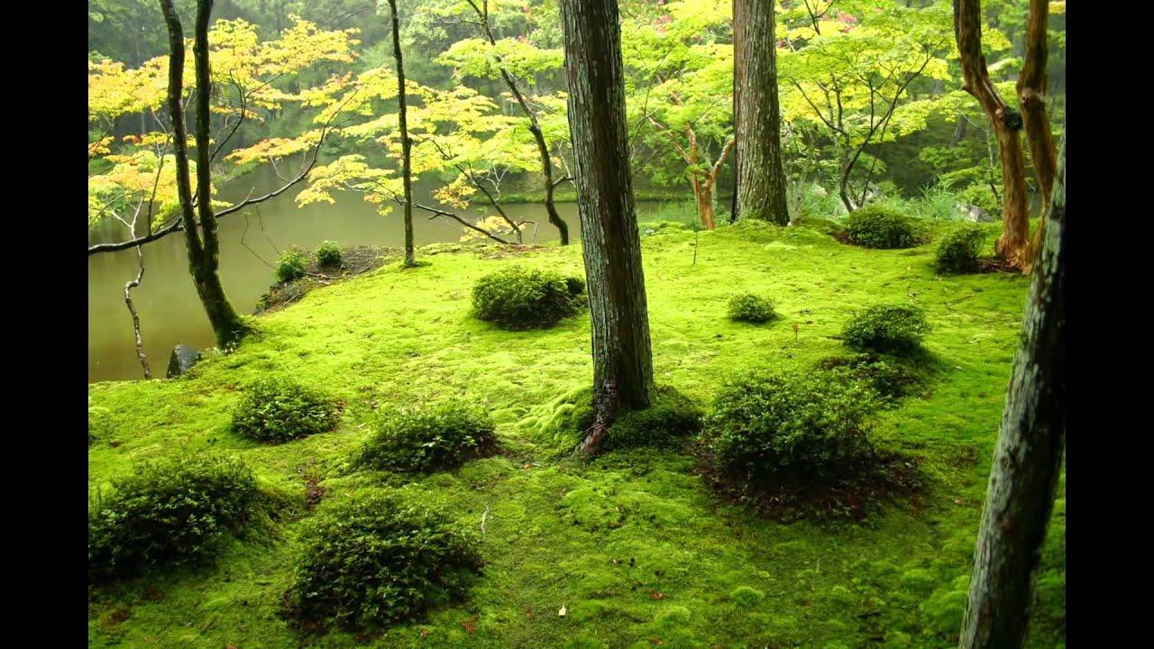 La Beauté Exotique Du Jardin Japonais / Beautiful Japanese Gardens