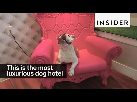 This is the world's most luxurious dog hotel