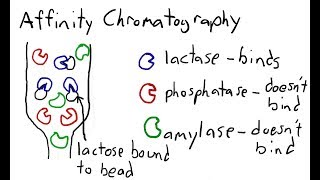 Protein Chromatography: Ion Exchange, Gel/Size Exclusion, Affinity