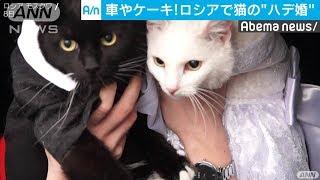 「ペットは家族の一員」 ロシアで猫の結婚式(19/11/16)