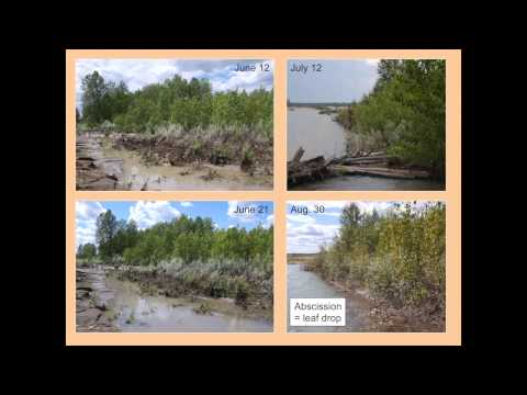 The 2012 Red Deer River Oil Spill: Analyzing Impacts in the Floodplain Zone