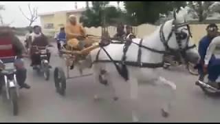 Sailkot Horse Race Try