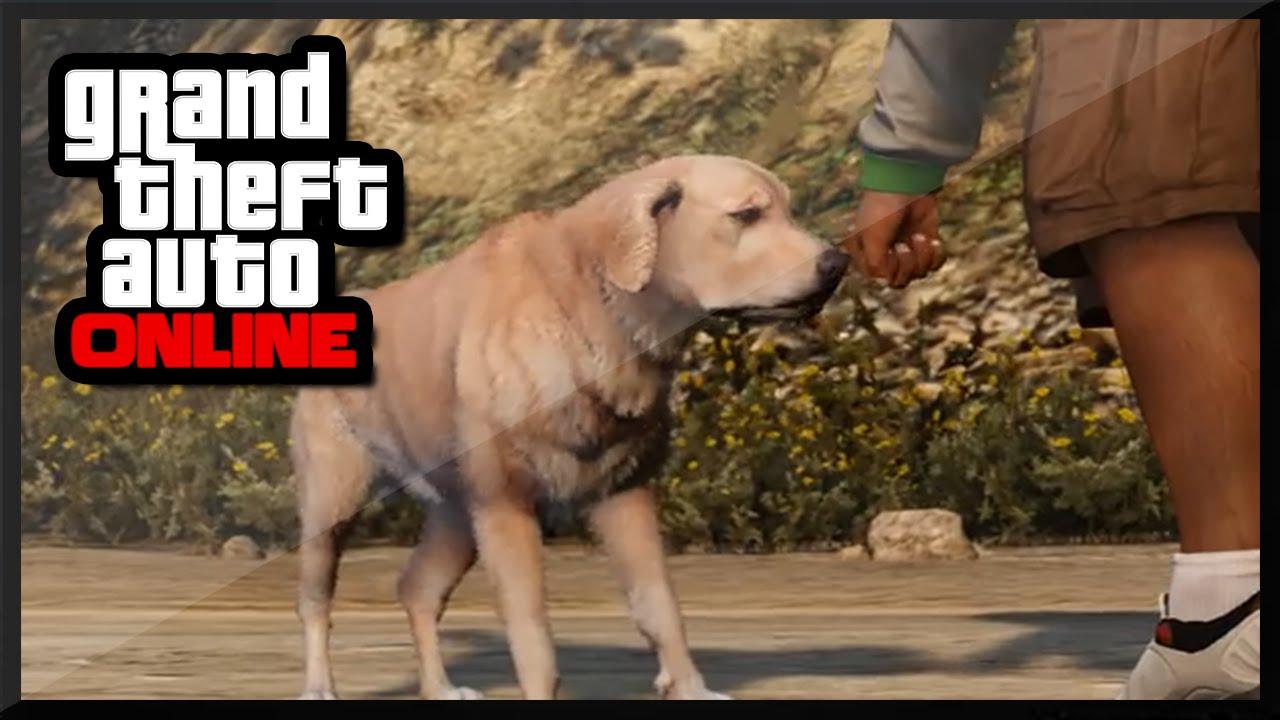 GTA 5 PS4 - LEAKED Pet DLC In GTA V ! (GTA 5 Online ...