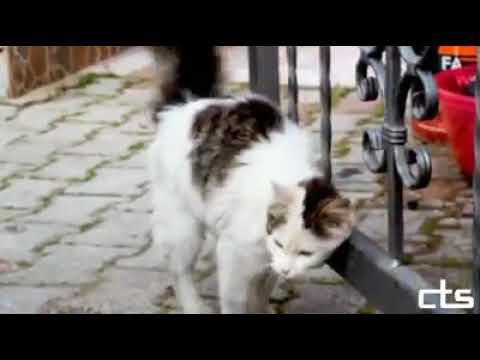 4 Nisan Sokak Hayvanları Günü