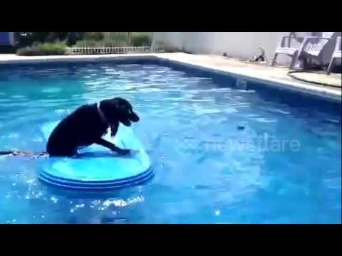 must-watch!-just-an-amazing-dog-moving-a-pool-float-to-retrieve-a-beloved-ball!!!