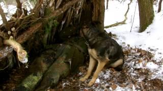 Peter - Allein im Wald