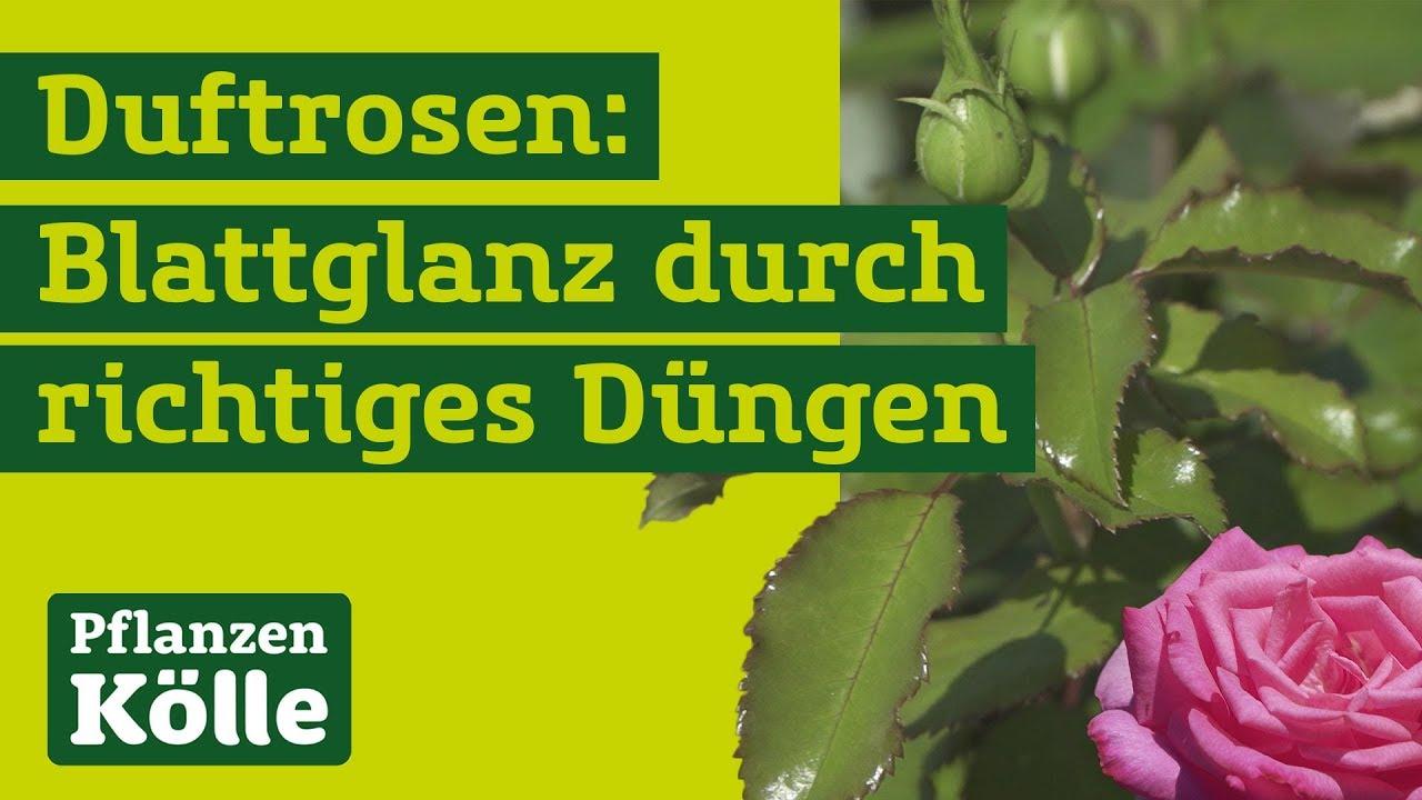 ᐅ Pflanzen Kolle Gutschein 10 Rabatt Sichern Oktober