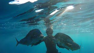 Pesca Submarina en Canarias - Mahi Mahi & Wahoo