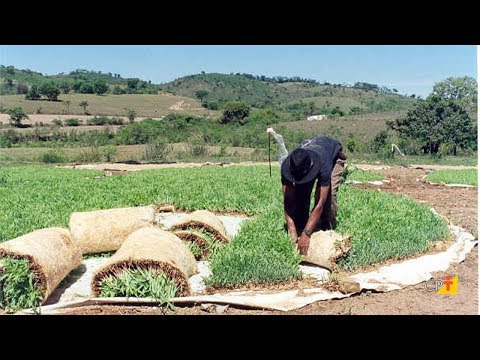 Curso a Distância Cultivo de Milho Hidropônico - Para Alimentação Animal