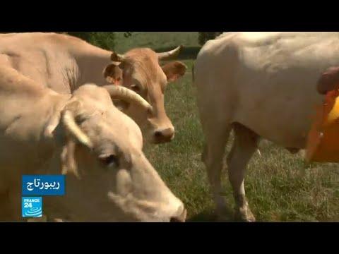 فرنسا: مساع لوضع حد لظاهرة انتحار المزارعين  - 15:54-2019 / 6 / 18