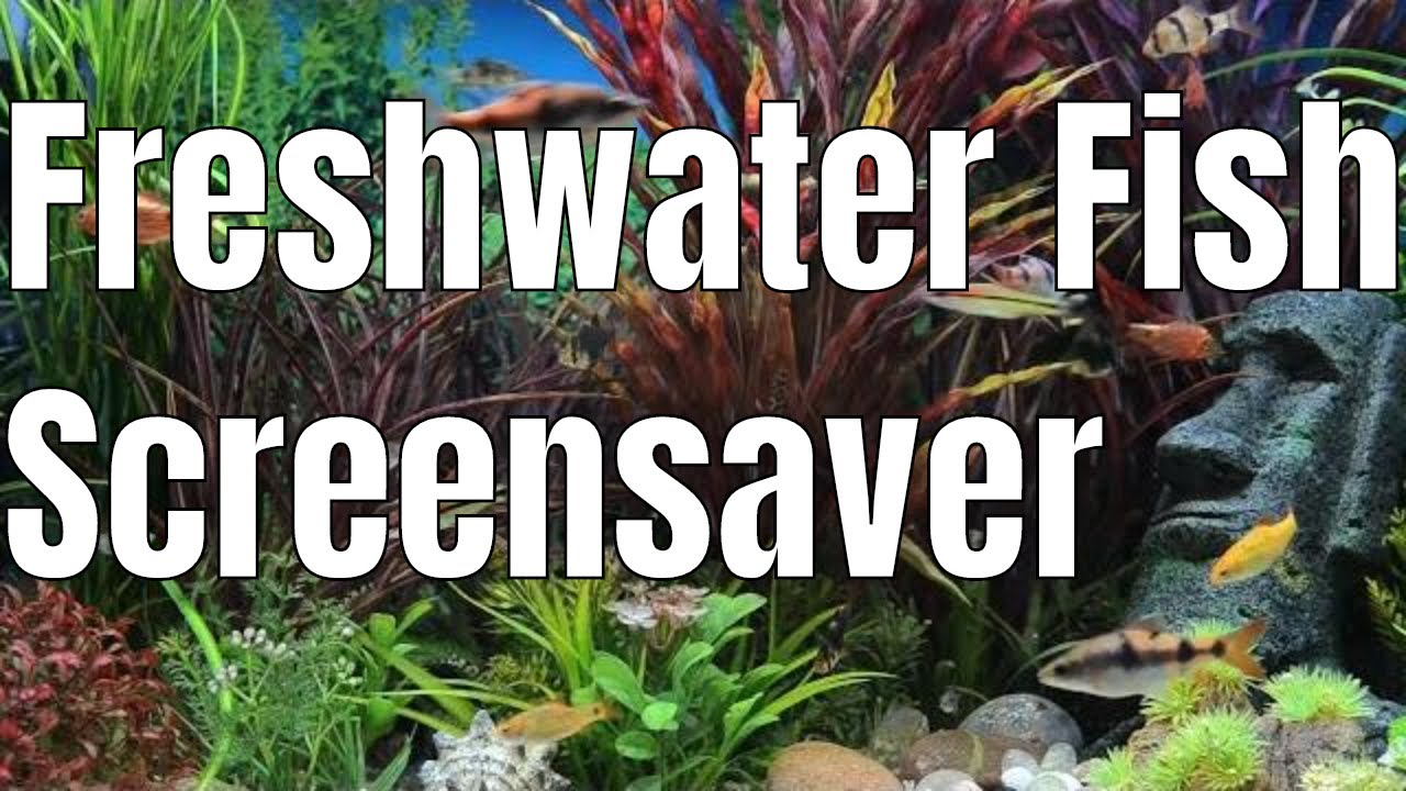 Amazon Fish Tank Video Freshwater Aquarium Youtube