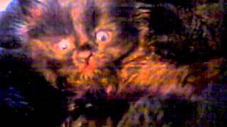 Rescue Kitten - I BLEND!