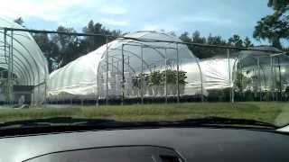 Organic Hydroponic Garden