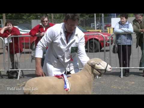 Dorset Horn & Poll Dorset Sheep Breeders' Association - May Sale in Exeter Livestock Market