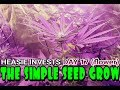 The Simple Seed Grow: Day 17 (flower) - Dreaming about a marijuana garden
