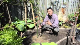 Gardening In My Backyard, Creating The Pergolia Garden, Part 3 0f 4