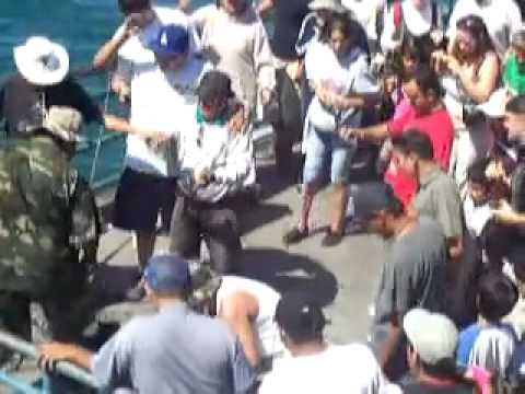 Treasure shark  being caught in Santa monica pier