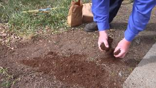 Lawn Repair - Planting Grass Seed