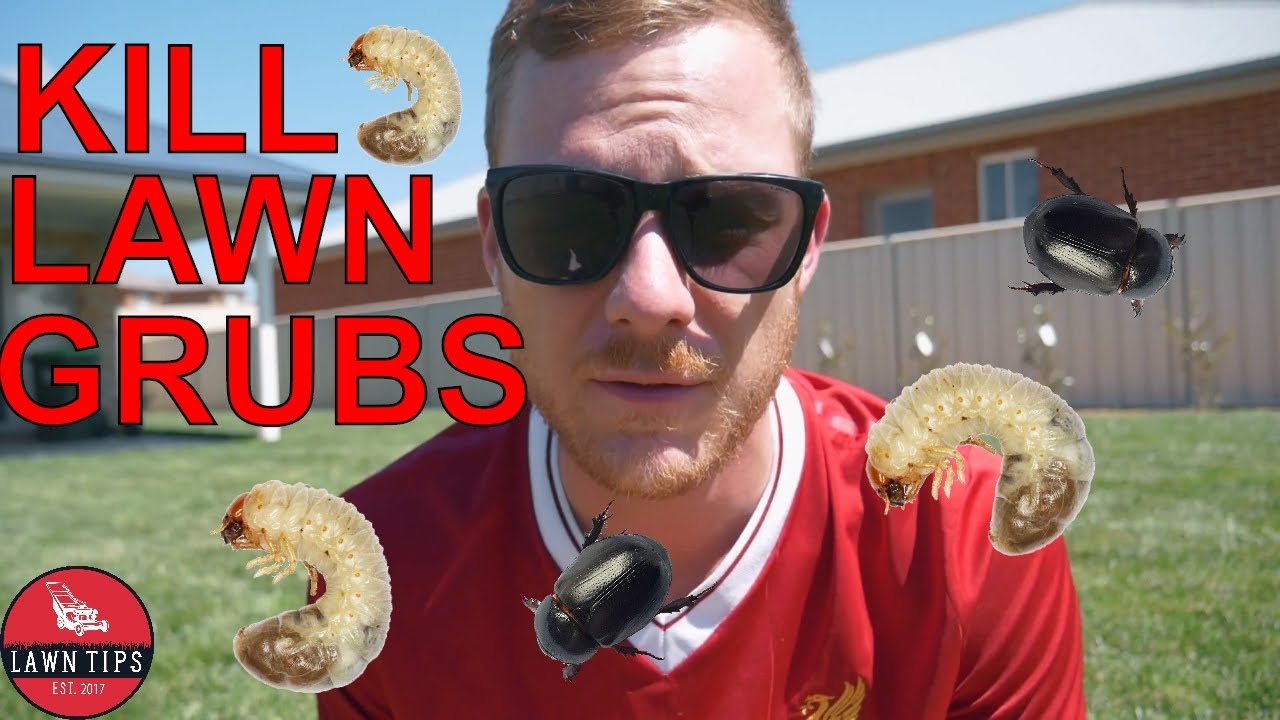 How To Kill Lawn Grubs Youtube