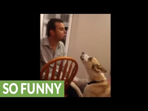 Dog and human engage in howling contest