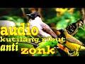 Suara Pikat Kutilang Ribut Audio Pikat Segala Jenis Burung  Mp3 - Mp4 Download