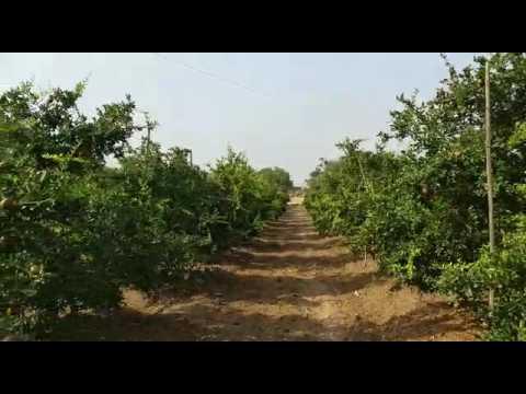 Natural agricultural in maharashtra