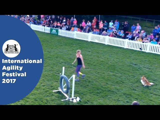 Championship Final - Medium | International Agility Festival 2017