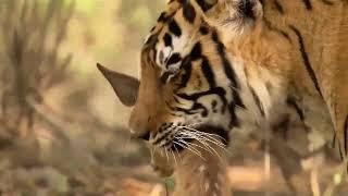 Wild Animals Life Full HD Documentary