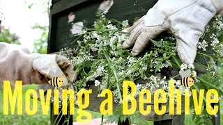 How to Move a Beehive? | Beekeeping with Maddie #11