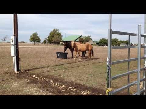 Horse Water Bucket Freeze Tip  - Buddy & Mr. T Horsemanship