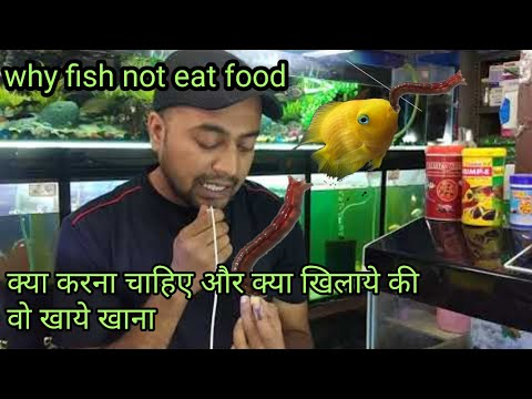 What To Do If My Aquarium Fish Does Not Feed Hindi1