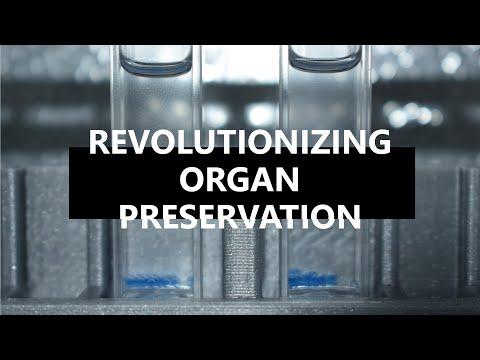 Engineered Antifreeze Proteins: Revolutionizing Organ Preservation