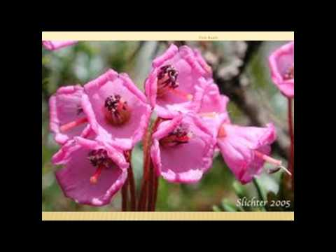 Pink Heath Pictures Gallery