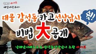 Live) 대물 감성돔 카고 선상낚시 비법 대 공개 -…