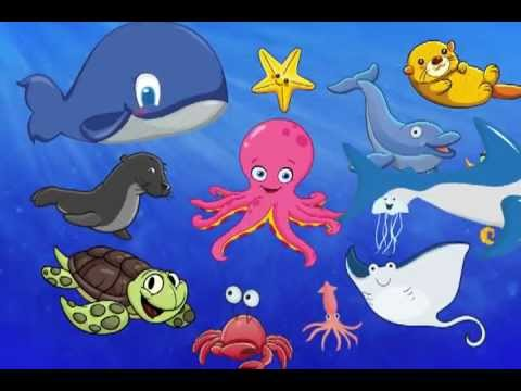 The First Sea Animal Words for Toddlers Fun Show - YouTube
