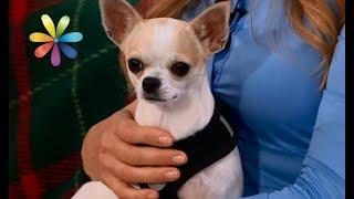 Гаджеты для выгула собак: тест драйв – Все буде добре. Выпуск 1106 от 17.10.17