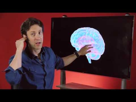 Your Brain is You: Sensing the World (Part 4 of 6)