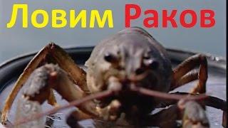 Диалоги о рыбалке  142   Река Кура способы ловли раков