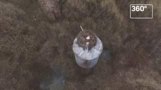 Пролетая над гнездом аиста. Коптеры засняли прилетевших вПодмосковье птиц