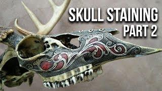 Skull Staining: Preparing Skulls for Staining (Part 2)