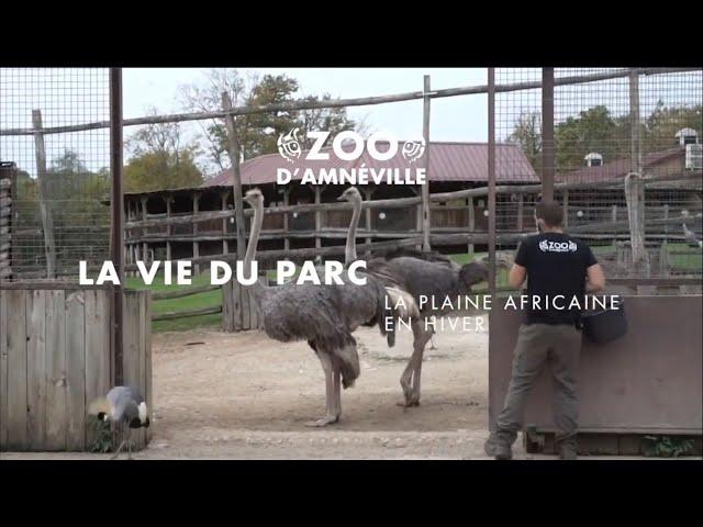 Vie du parc | La plaine africaine automne/hiver