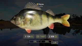 ★ Live Stream ★ Russian Fishing 4 ★