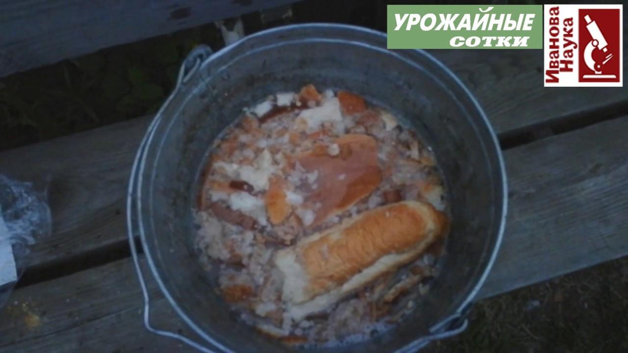 ТОЛЬКО ТАК правильно готовить хлебное удобрение. Тогда от него будет максимальная польза.