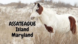 Assateague Island Maryland Stąte Park Camping and Travel Day