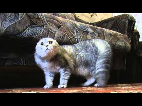 Говорящий кот  Васька