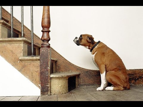 Your dog scared up and down the stairs?