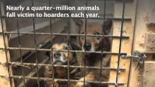 Aspca Rescues Hundreds Of Dogs From Ohio Hoarder